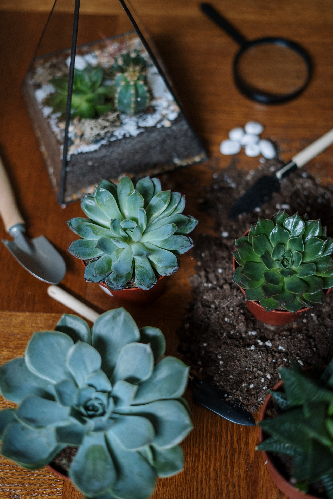 Mantener la casa fresca en verano con plantas